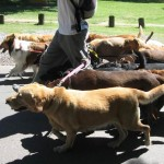 Walk Dogs to Make Money from Home