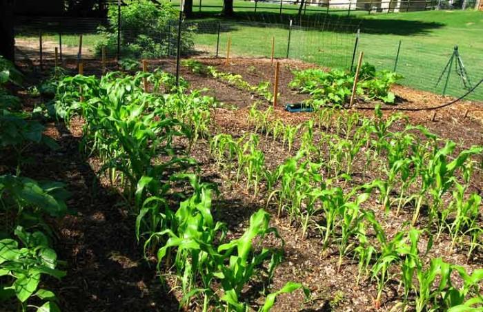Gardening to make money